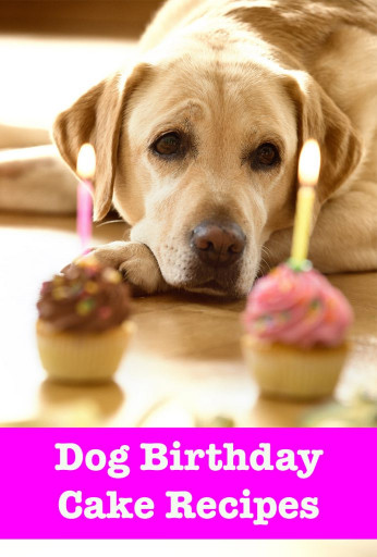 Birthday Cake For Dogs  Dog Birthday Cake Recipes From Easy To Fancy Bakes