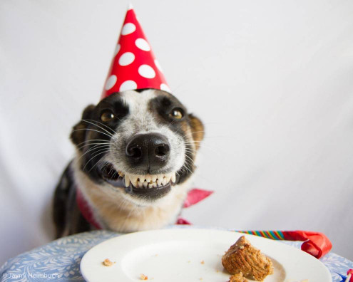 Birthday Cake for Dogs Lovely How to Make A Dog Birthday Cake
