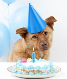 Birthday Cake For Dogs  The Ultimate Guide to Dog Birthday Cake Recipes