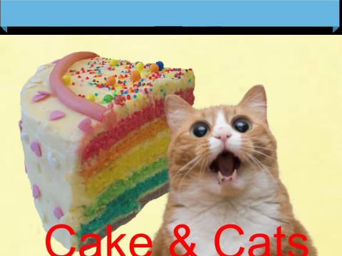 There'S A Cat Licking Your Birthday Cake  There s a Cat licking your Birthday Cake l Video Star